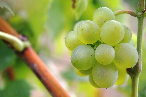 виноград серед діуретиків