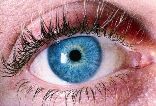 Виявлення хвороби Альцгеймера по очах