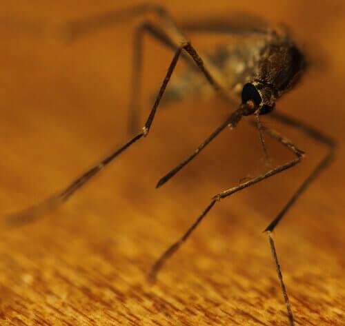 натуральні засоби від комарів