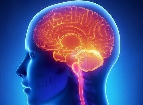 11 щоденних звичок, що шкодять мозку
