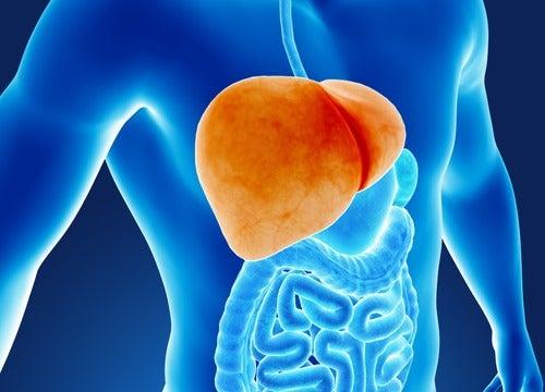 6 звичок, що шкодять печінці