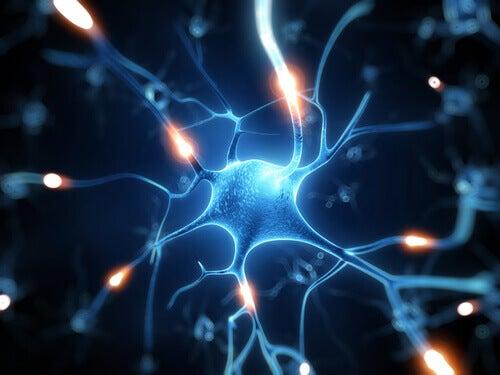 Резвератрол - міцний щит для мозку
