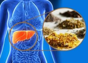 Лікарські трави для очищення печінки