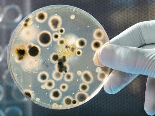 Типи бактерій, знайдені на грошах