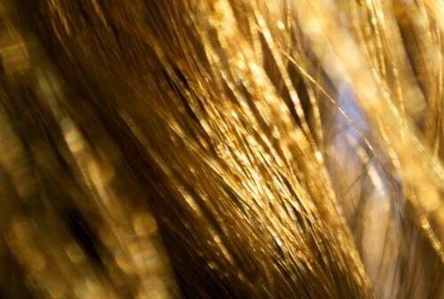 Забудьте про сухе волосся з природними засобами