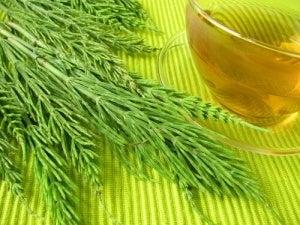 Хвощ - рослина для схуднення і мінералізації