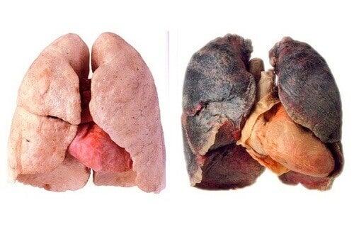 Поради для очищення легень
