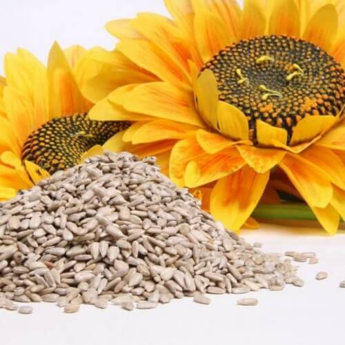 насіння соняшника та мігрень