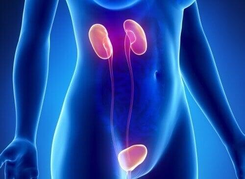 10 симптомів ниркової недостатності