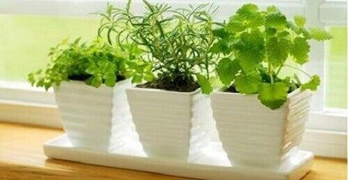 Десять рослин, які притягують позитивну енергію