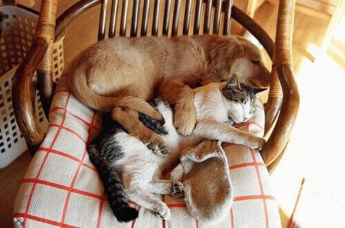 собака та кішка на кріслі