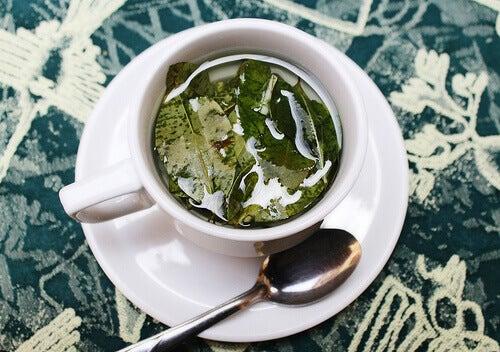 листяний чай це причина гінгівіту