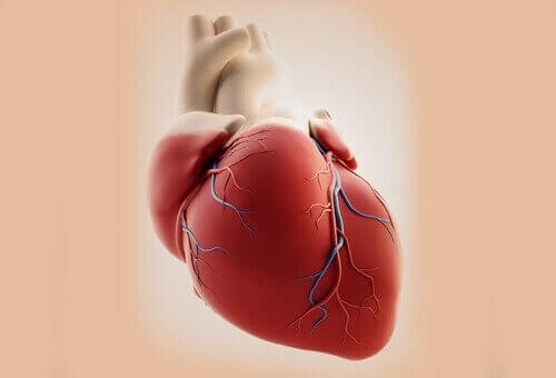 схематичне зображення серця