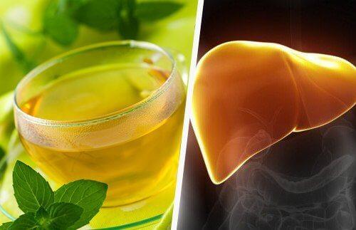 фітотерапія захищає печінку
