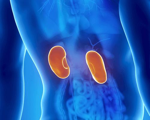 ниркові інфекції та їх симптоми