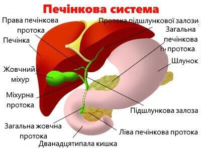 3-pechinkova-systema-kopiya