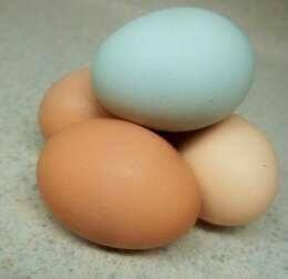 яйця різного кольору