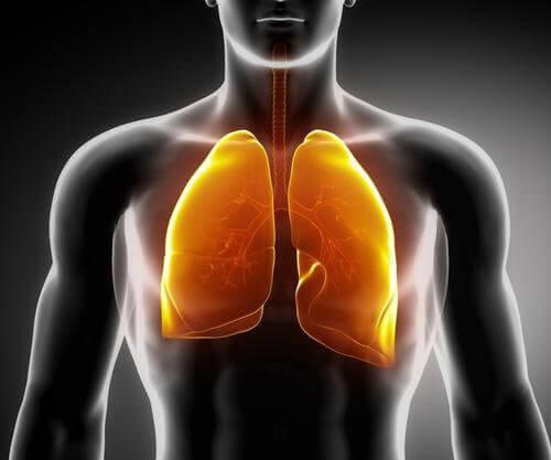 3 чаї для зміцнення легенів