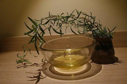 чайне дерево