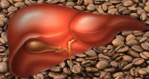 pechinka-kava
