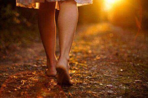 прогулянка в лісі на заході сонця