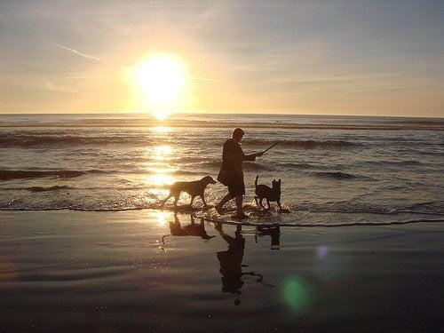 прогулянка на морі з собаками
