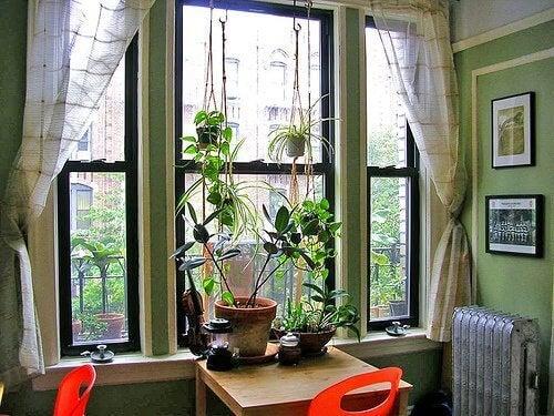кімнатні рослини на столі