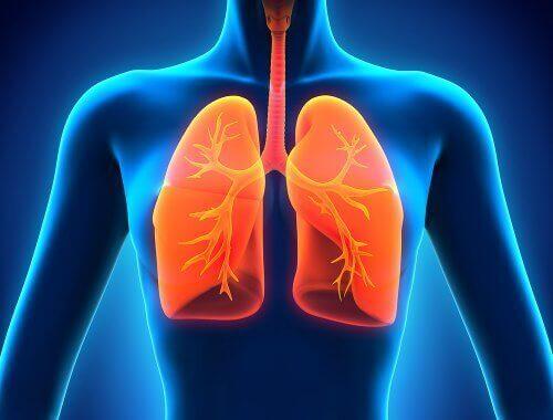 схематичний малюнок людини з легенями