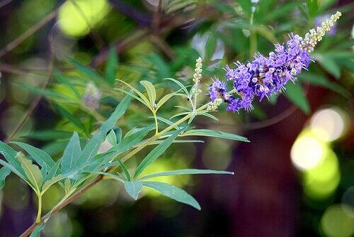 авраамове дерево для синдрому полікістозних яєчників