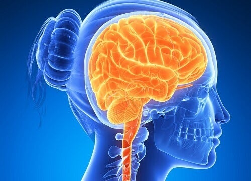 6 продуктів для підтримання активності мозку