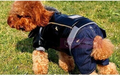 джинсовий одяг для собак