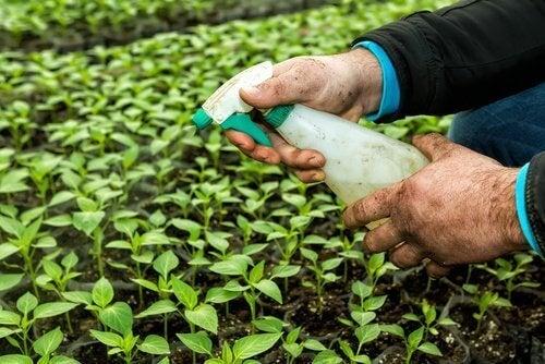 пестициди та щитоподібна залоза