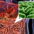 мікрофлора кишківника
