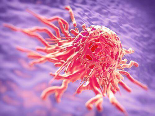 ракова клітина