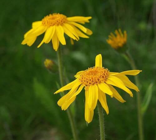 квіти від болю в спині