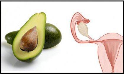 Авокадо та жіноча матка