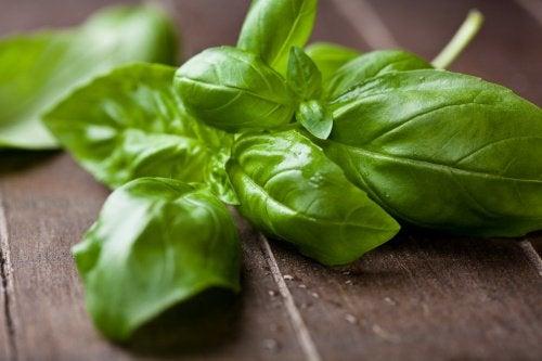 базилік знижує рівень холестерину