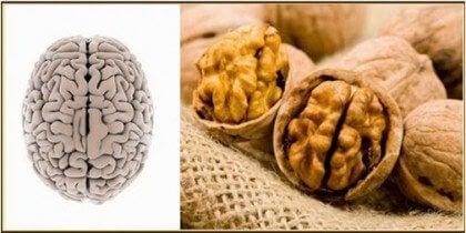 Горіхи та мозок
