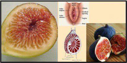 Інжир та статеві органи