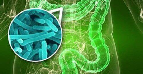 kyshkovi-bakterii