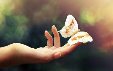 метелик на долоні