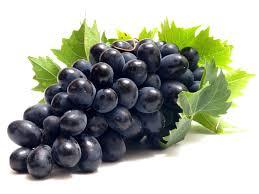 синій виноград