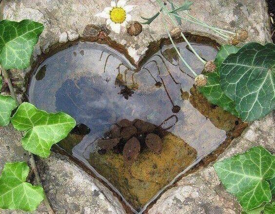 Калюжа в формі серця