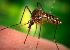 1-комар-укус
