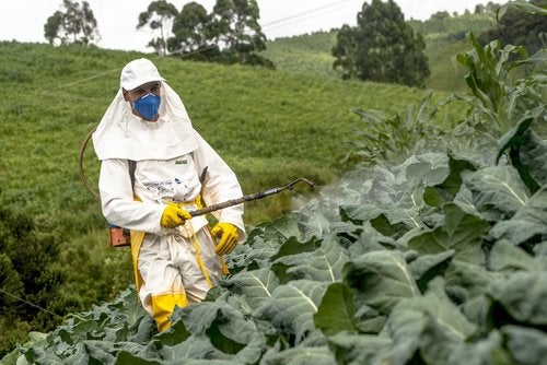 пестициди та їх вплив на людину