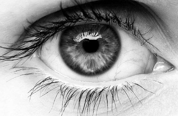 людське око