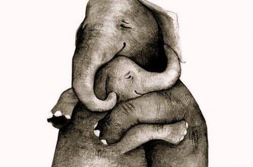 1-slony-obiymy