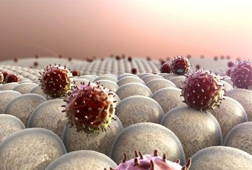 кісточки авокадо зміцнюють імунну систему