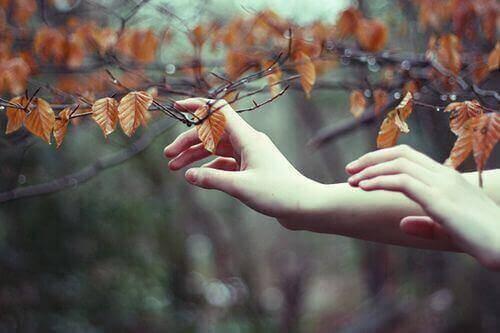 руки гілка