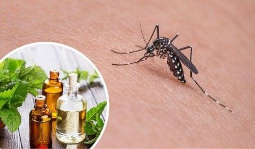 11 трав, які відлякують комарів